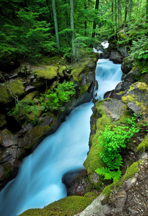 Fine art stock photograph of Avalanche Creek in Glacier National Park. The glacially-fed creek rushes through lush forest and small canyons in early morning.