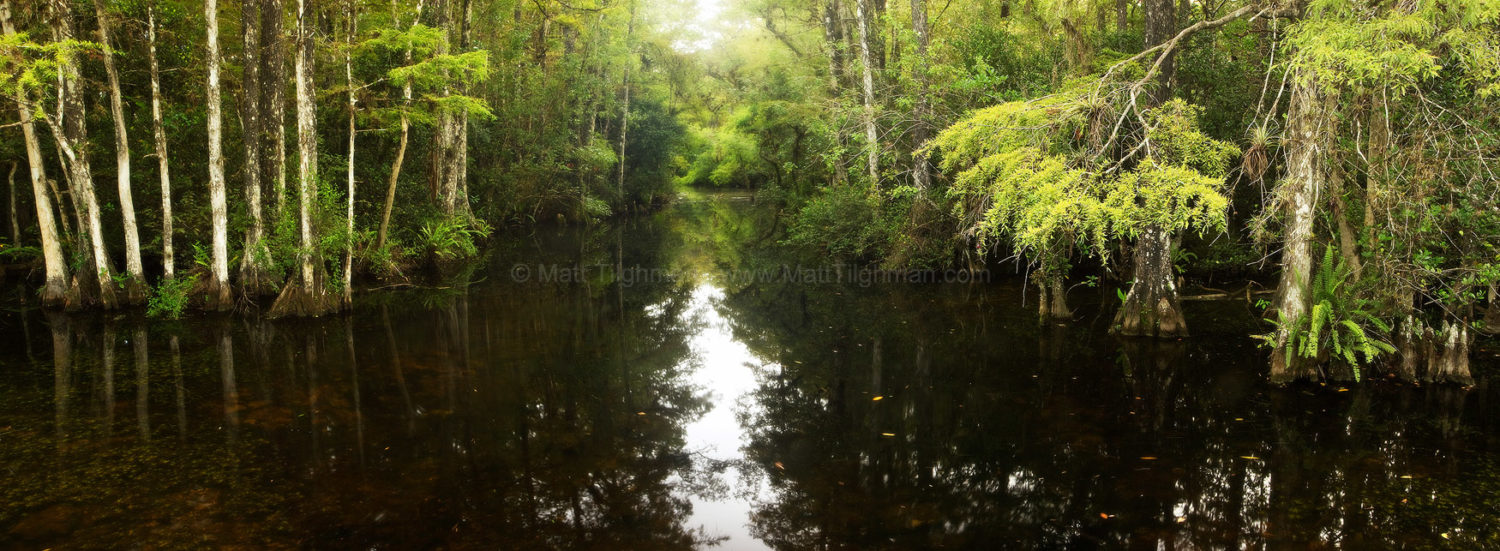 Fine art stock photograph of Sweetwater Slough, in Big Cypress Preserve, Florida. During the rainy season, these sloughs become major waterways for wildlife.