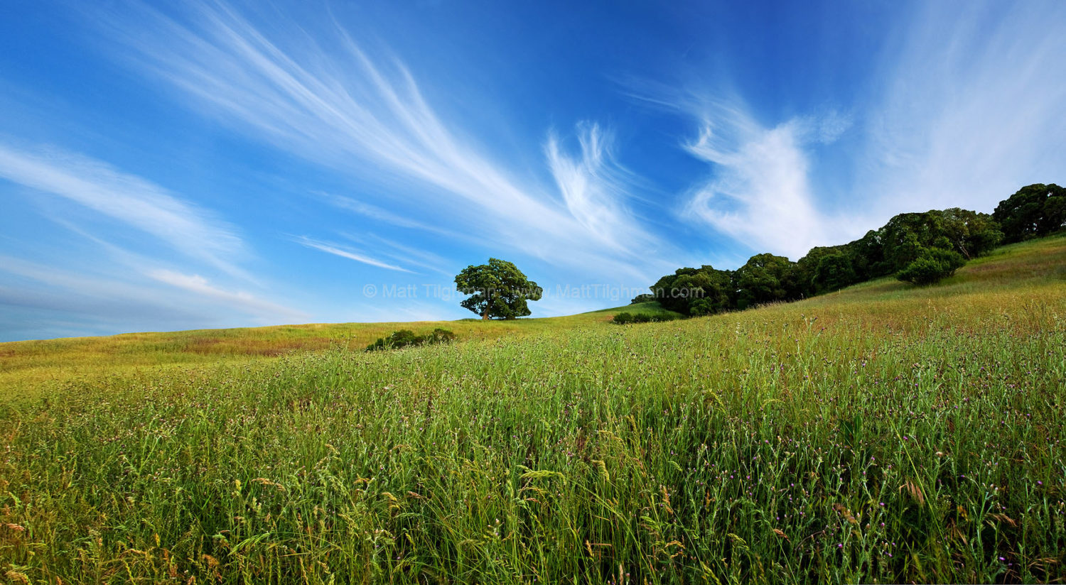 Fine art stock photograph of early summer scene in Calero County Park, California. The wildflowers have faded but the grass remains green, dominating the landscape with rolling verdant hillsides.