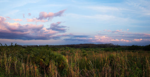 Fine art stock landscape photograph of a beautiful Florida Everglades sunset amidst a balmy spring breeze and endless sawgrass prairies.