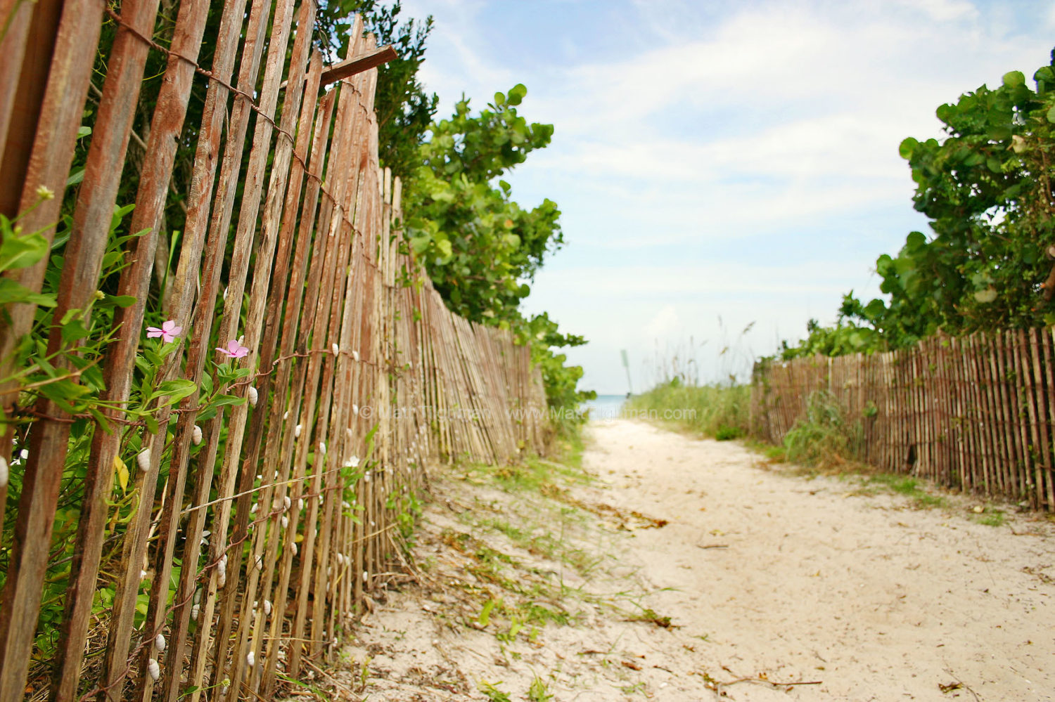 Fine art stock photograph of path leading to a secluded beach in Bear Cut Nature Preserve, Key Biscayne, Florida.