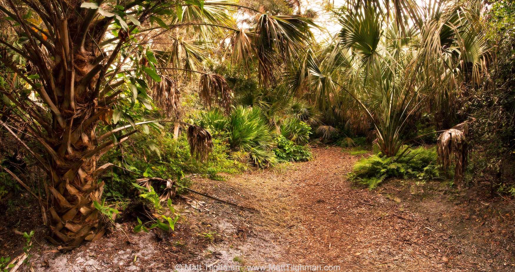 Florida Hardwood Hammock at Dusk