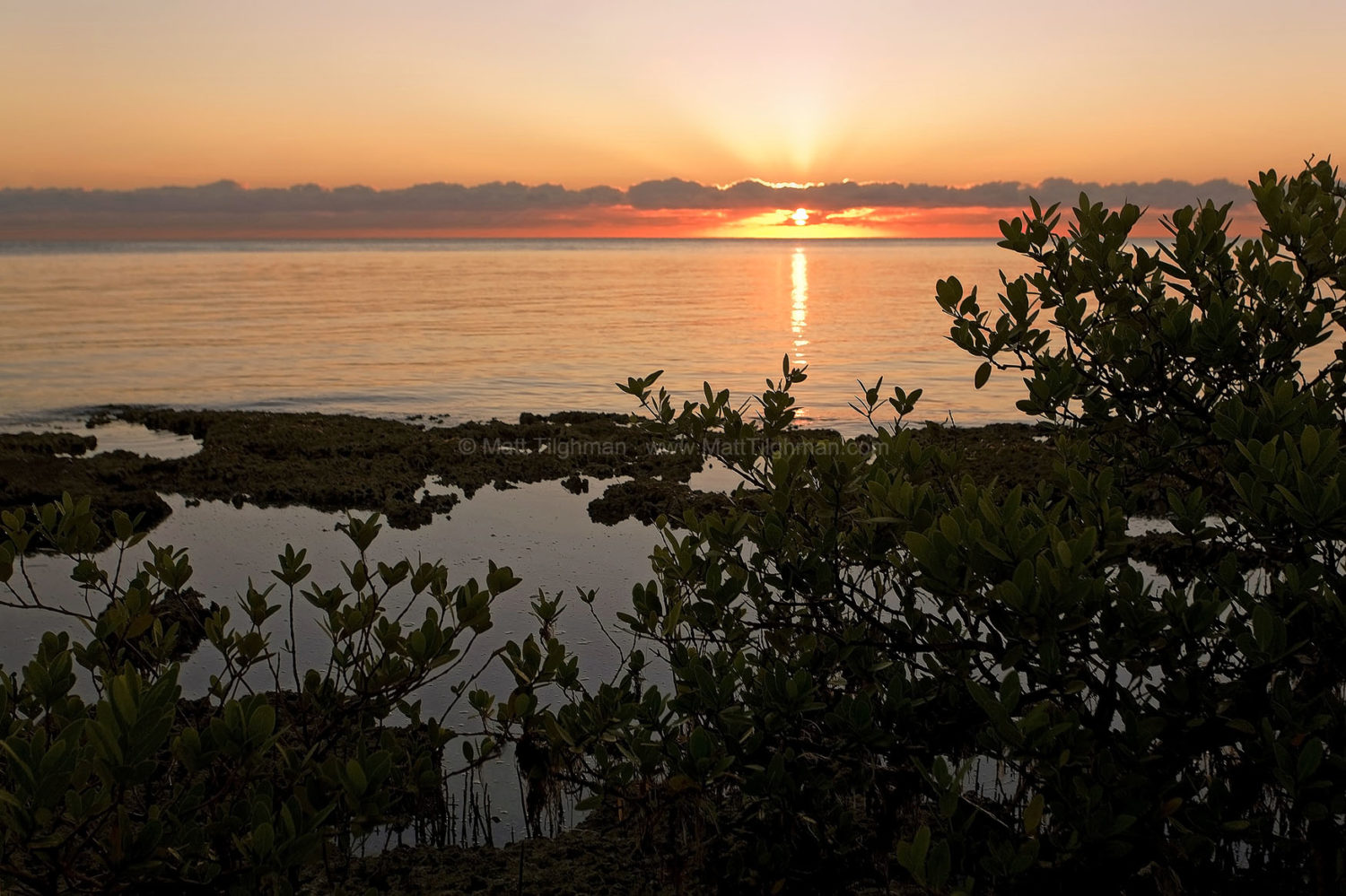 Fine art stock photograph of South Florida sunrise amidst mangroves and Bear Cut's famous fossilized reef, on Key Biscayne.