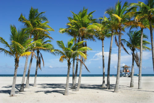 Fine art stock photograph of beautiful blue skies, shimmering turquoise waters, and tropical palm trees along Key Biscayne beach, Florida