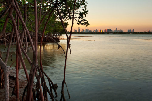 Miami and Mangroves - City and Wilderness