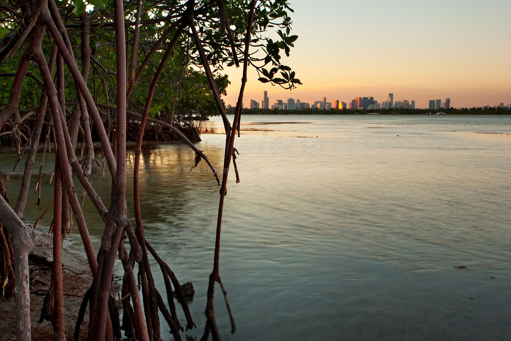 Fine art stock photograph of Miami and Biscayne Bay at sunset, framed by mangroves in Bear Cut Nature Preserve. The city is nearby much natural wilderness, if one cares to seek it out.