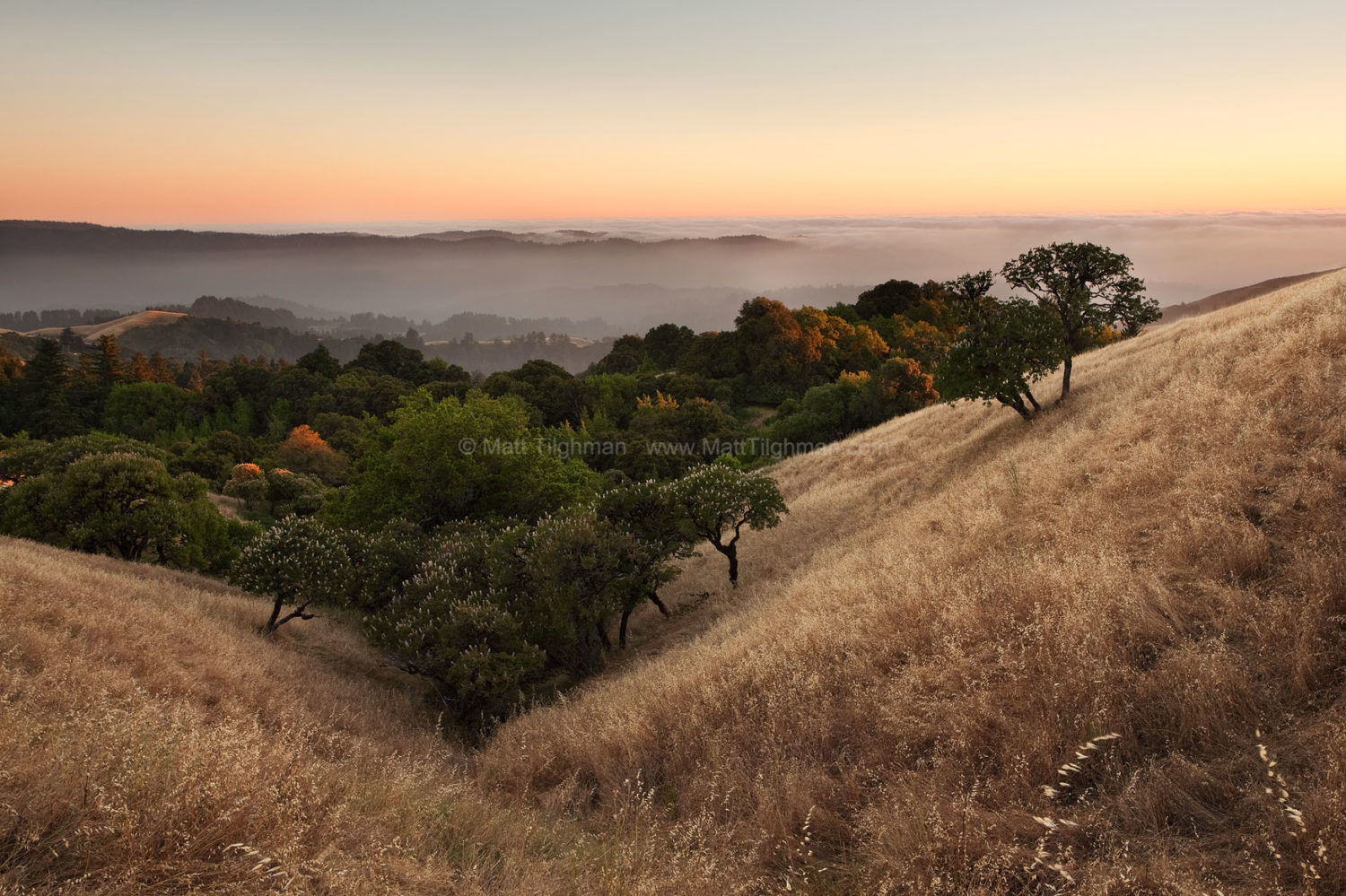 Fine art stock photograph from Russian Ridge in Summer. The season brings a sublime peace to the Santa Cruz Mountains of California, which this sunset showcases perfectly.