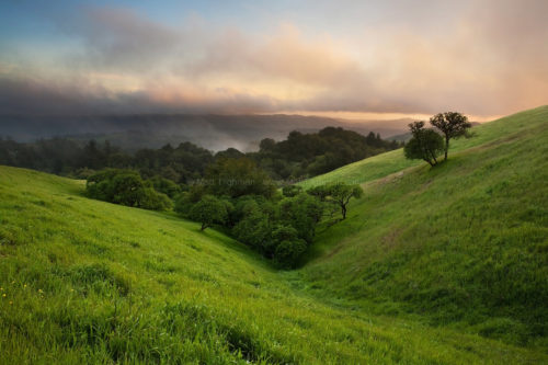 Fine art stock photograph from Russian Ridge Open Space, where the California spring landscape comes to life following a particularly rainy winter.
