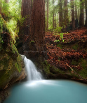 Fine art stock photograph of a small seasonal waterfall, flowing over the roots of a giant redwood tree in Thornewood Open Space, creating a truly magical scene.
