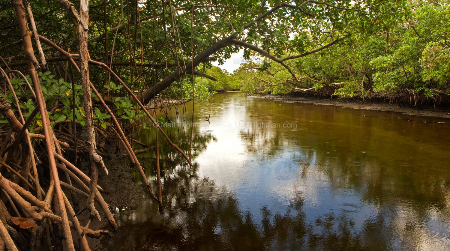 Fine art stock photograph of Whiskey Creek in Von D. Mizell-Eula Johnson State Park, glistening in late afternoon, right before a storm passes through.