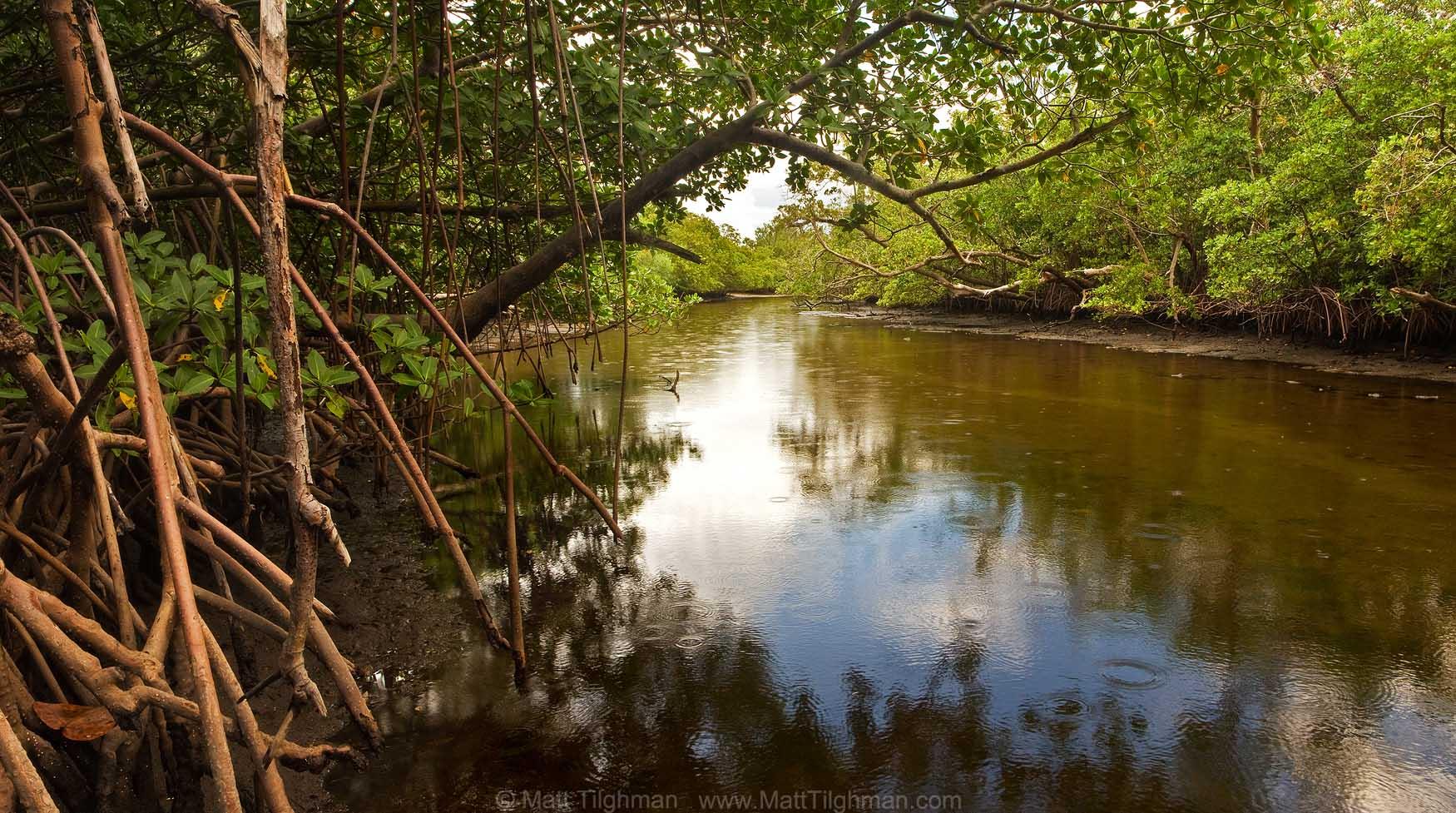 Last Shot Before the Rain - Whiskey Creek, Florida