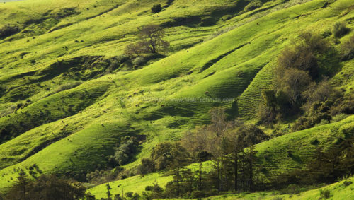 Fine art stock photograph from Andrew Molera State Park, in California's Big Sur region. Rolling emerald hillsides descend towards the coast.