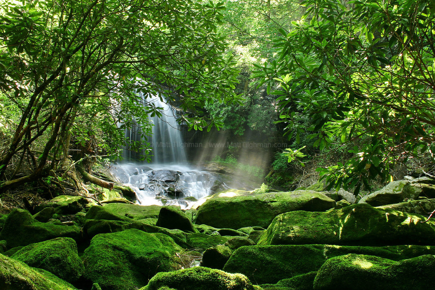 Fine art stock photograph of Charlie Falls, in North Carolina, from within Rhododendron forest. From this vantage, the large cascade takes on the appearance of a hidden waterfall awaiting discovery.