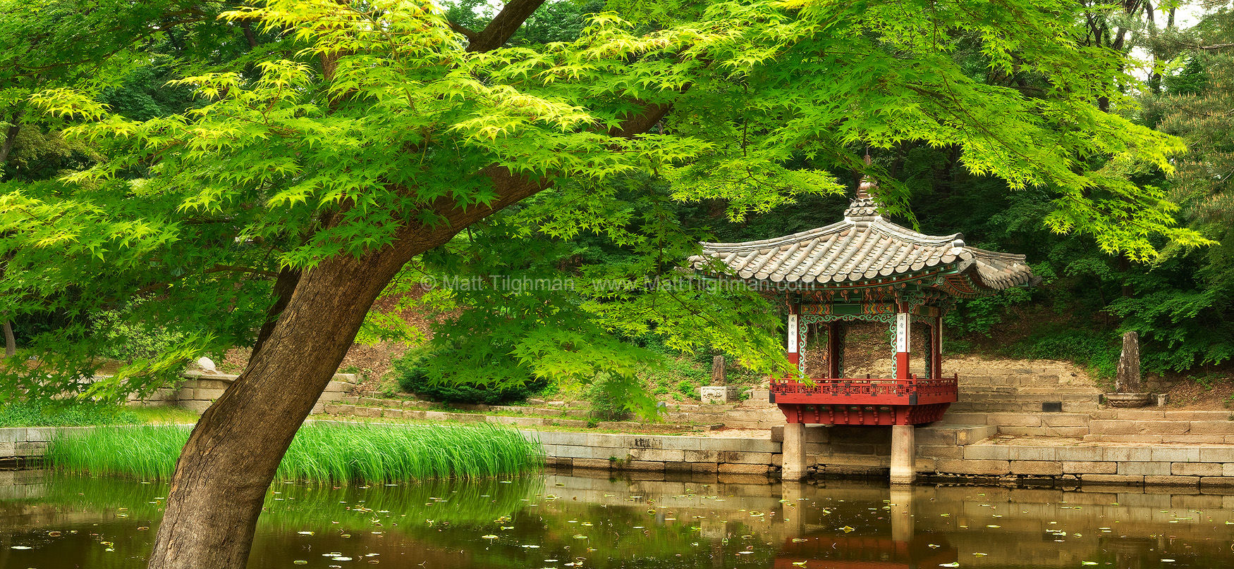 Fine art stock photograph from the Changdeokgung Secret Garden, in Seoul South Korea. Beautiful in any season, it is seen here in the fresh green garb of spring.