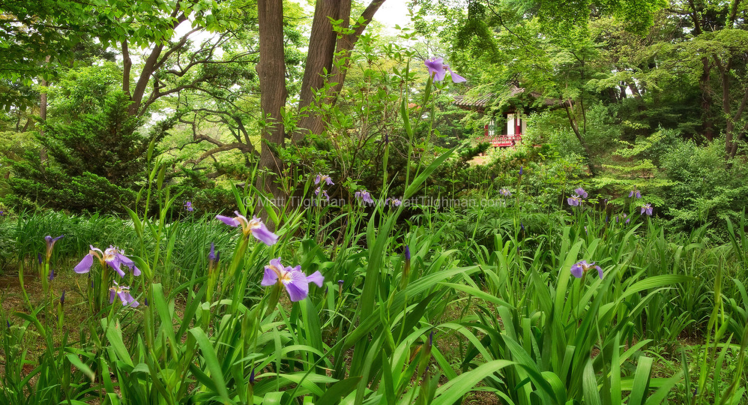 Beautiful fine art stock photograph from the Secret Garden of the Changdeokgung Palace in Seoul, South Korea.