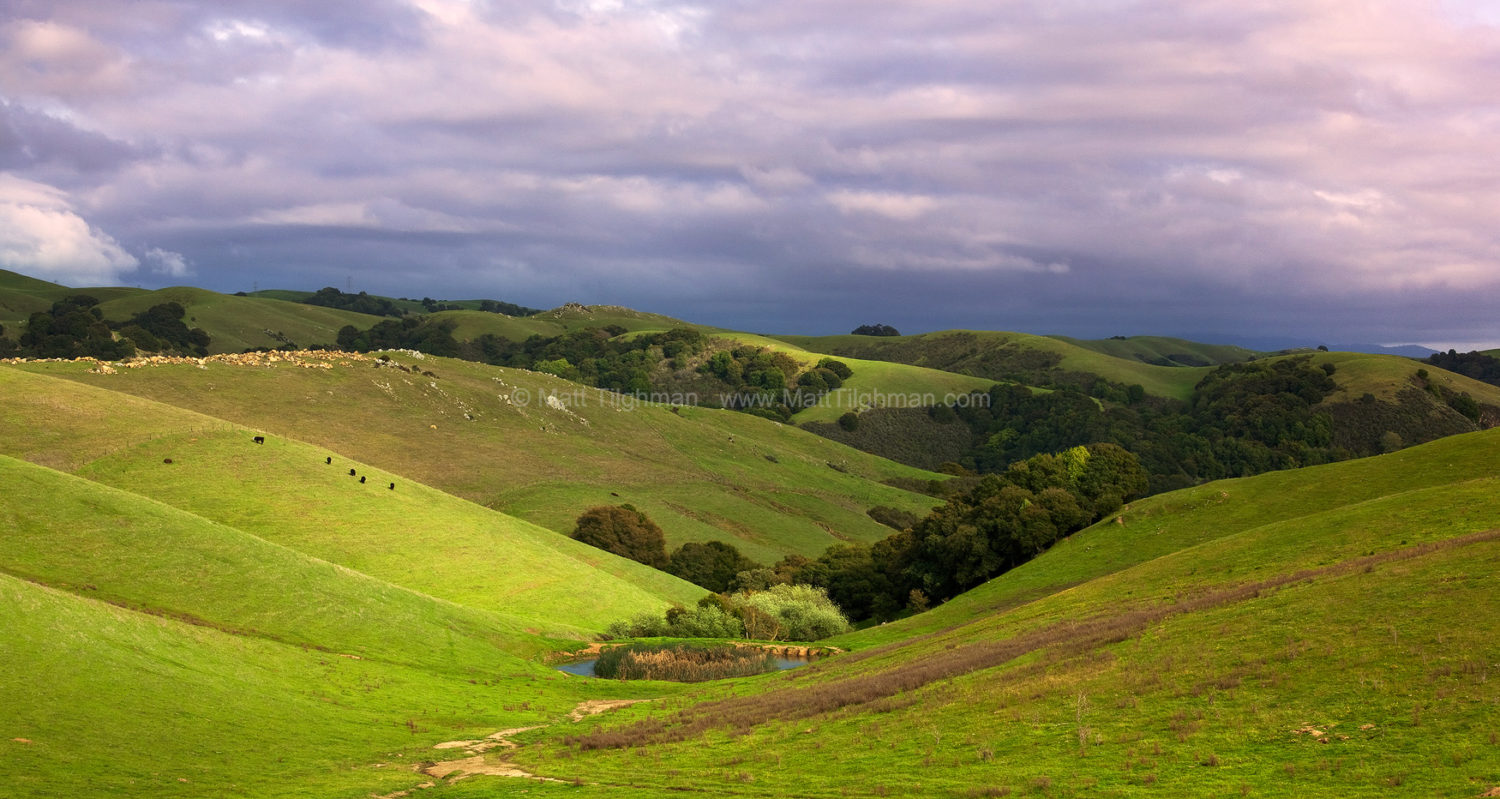 Fine art stock photograph of bucolic California landscape, from Garin/Dry Creek Pioneer park in the East Bay Area of California.