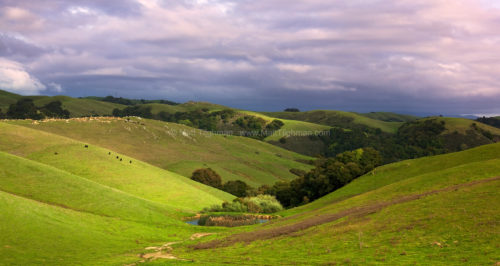 Pastoral California Hillside