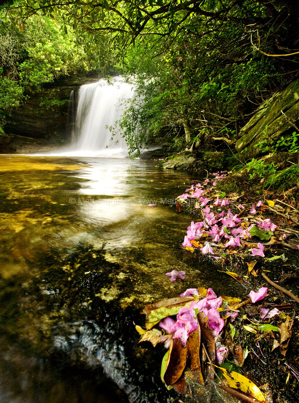 Fine art stock photograph of Schoolhouse Falls in Panthertown Valley, framed by fallen rhododendron flowers. The beautiful blooms make the waterfall even more idyllic.