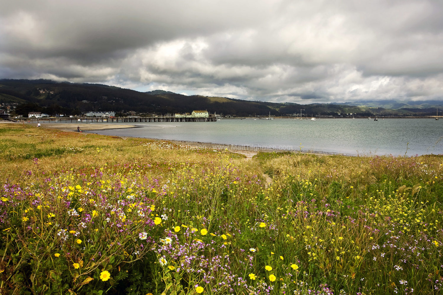 Fine art stock landscape photograph of a California spring wildflower bloom, on Half Moon Bay's Pacific Coast.