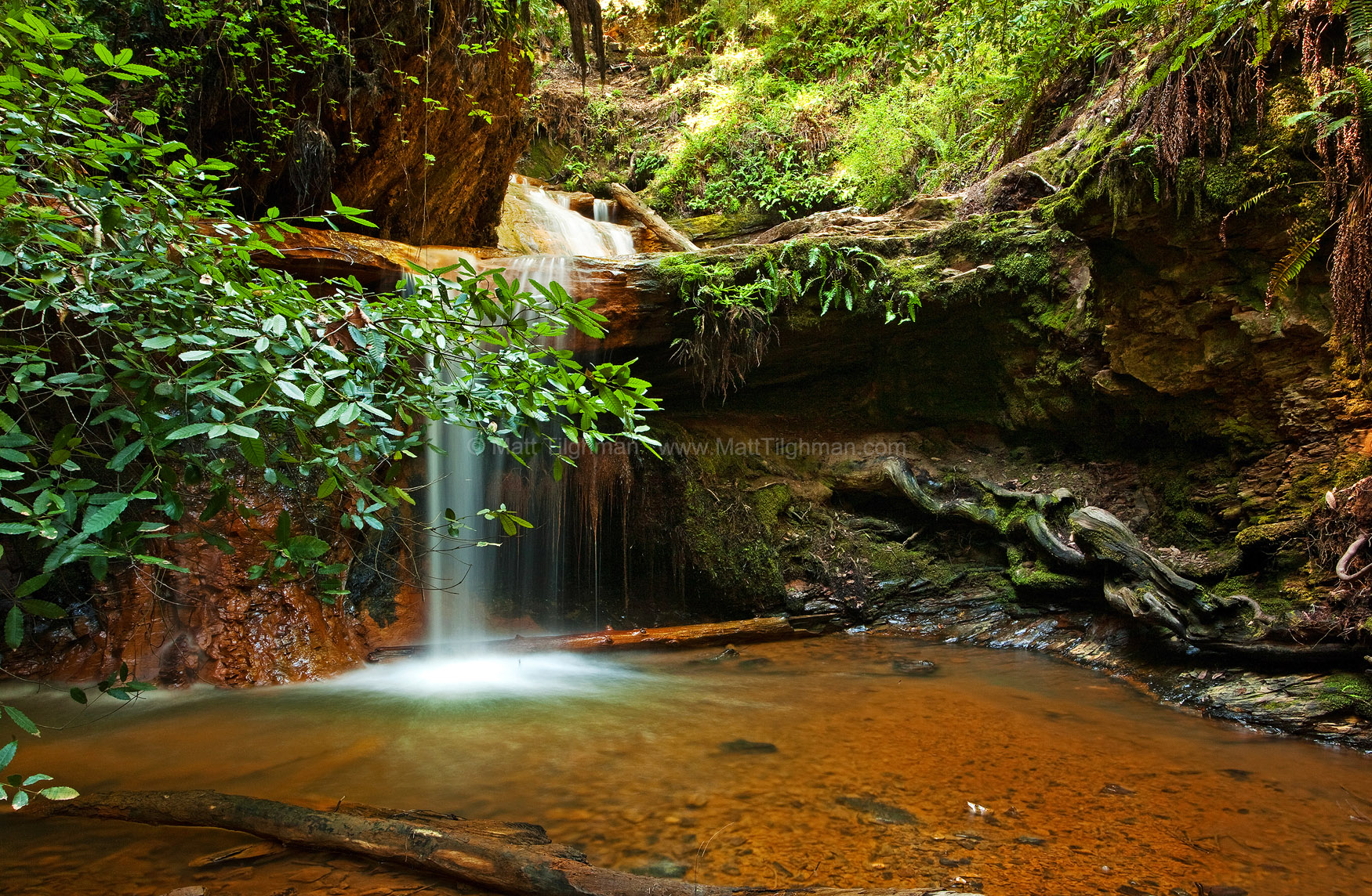Fine art stock landscape photograph of Lower Golden Cascade, a small peaceful waterfall in Big Basin Redwoods State Park, California