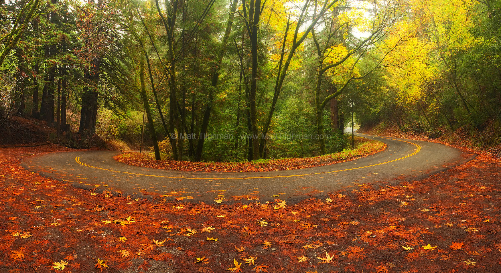 Fine art stock landscape photograph near Palo Alto, California. This image is from Old La Honda Road, a good place to find fall color in the Santa Cruz Mountains.