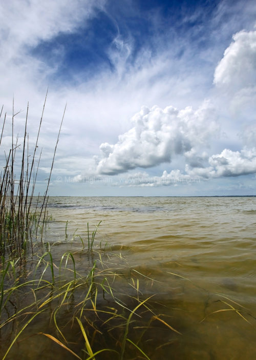 Fine art stock landscape photograph from North Carolina's Outer Banks. On the lee of the barrier island, a coastal estuary provides a calm refuge for wildlife.
