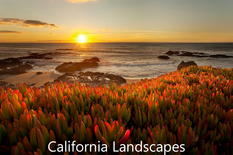 Link to California Landscapes image gallery