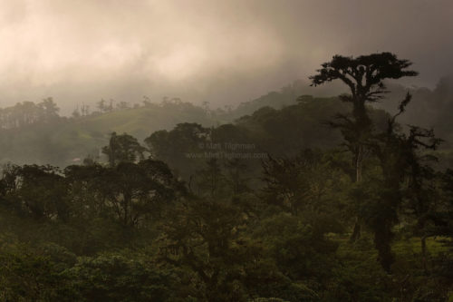 Fine art stock photograph of the Costa Rican cloud forest at sunset. Unlike most tropical jungles, cloud forests offer vantages which show the whole landscape.