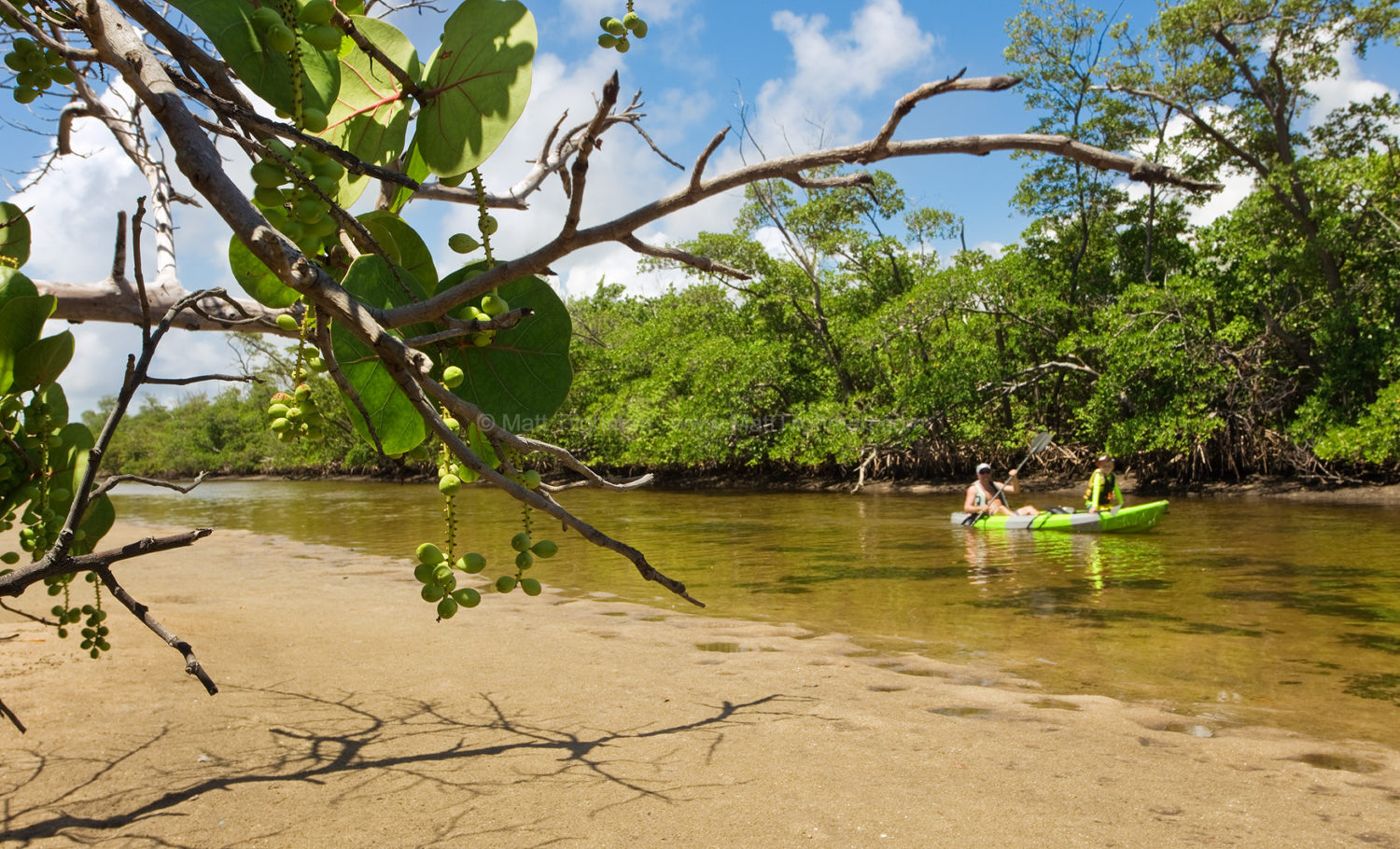 Fine art stock photograph of father and son kayaking through South Florida's wild mangrove coastal landscape, in Von D. Mizell-Eula Johnson State Park.