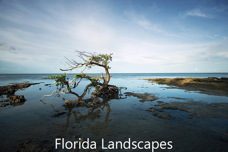 Link to Florida Landscapes image gallery