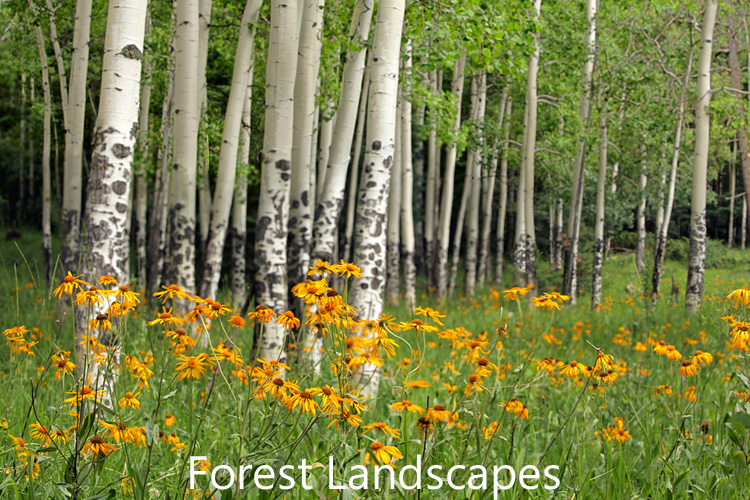 Link to forest nature images gallery
