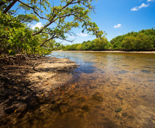 Fine art stock photograph from Ft. Lauderdale's Whiskey Creek. The park's tidal mangrove estuary and dense forests host a wealth of South Florida wildlife.