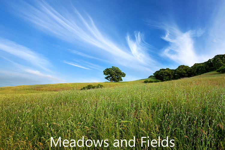 Link to image gallery of meadows and fields