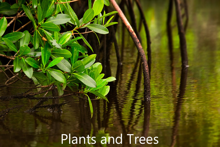 Link to plants and trees image gallery