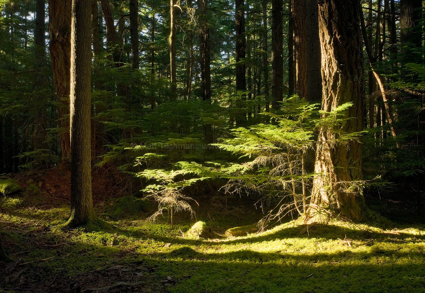 Fine art stock photograph of sunset light in the forests of Mount Constitution, on Orcas Island in Washington state's San Juan Islands archipelago.