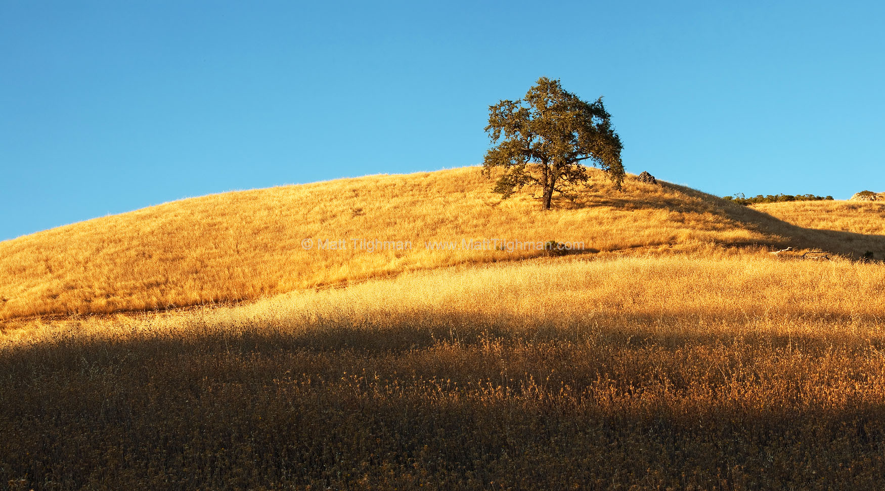 Fine art stock photograph of a lone oak tree in Monte Bello Open Space. Just this one tree breaks up the beautiful monotony of the California chaparral hillside.
