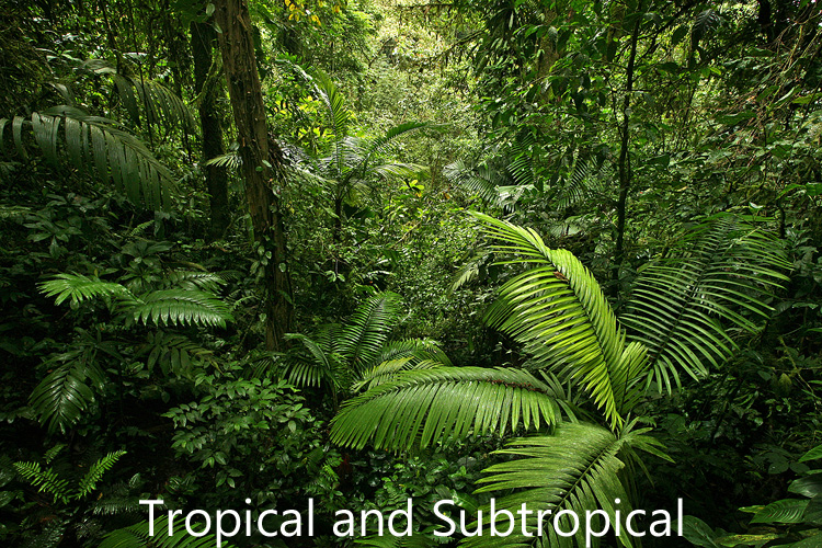 Link to tropical and subtropical image gallery