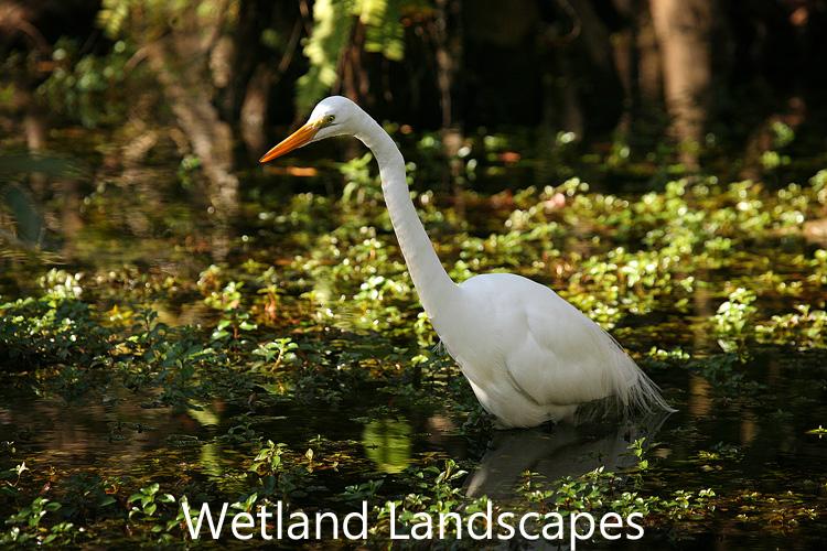Link to wetlands image gallery