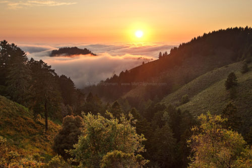 Fine art stock photograph from Whittemore Gulch, in Purisima Creek Redwoods, California. Fog from the Pacific Ocean turns the landscape into a cloudy archipelago.