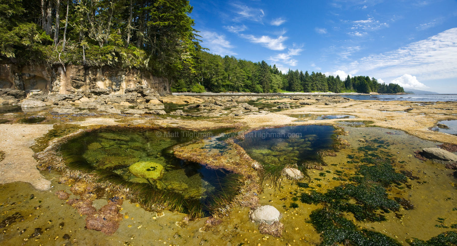 Fine art stock photograph from Botanical Beach, in Canada's Juan de Fuca Provincial Park. The beach's tide pools showcase the areas diverse coastal wildlife.