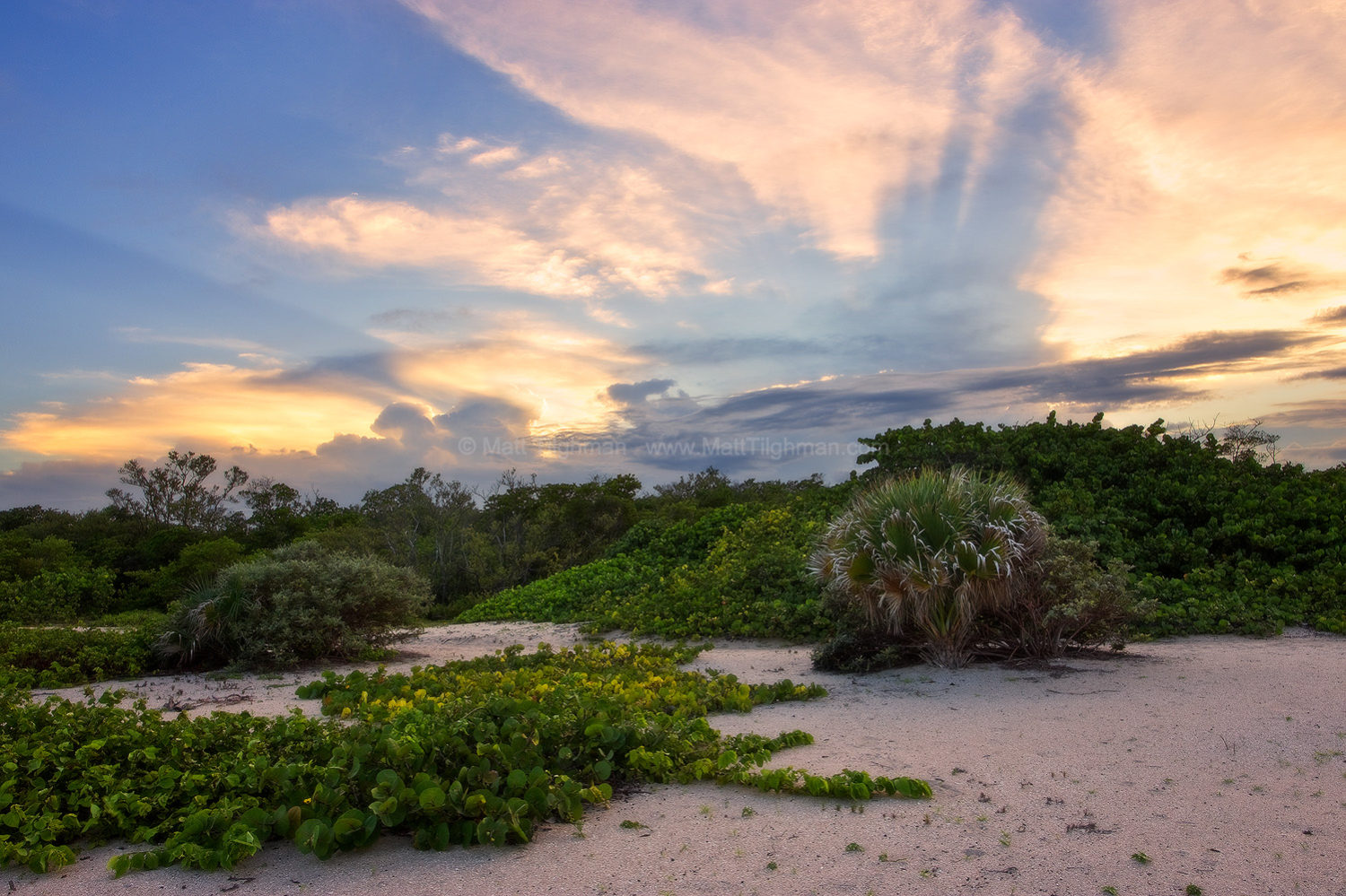 Fine art stock photograph from Mizell-Johnson State Park, in South Florida. Typical native dune vegetation frames a beautiful stormy sunset.