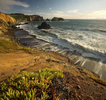 Fine art stock photograph from Rodeo Beach, in the Marin Headlands of California. The blooming ice plant faces the setting sun and the Pacific Ocean.