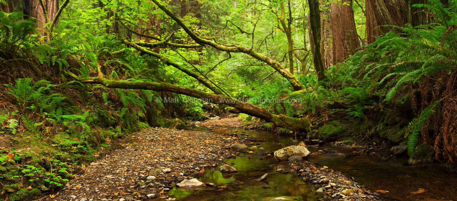 Fine art stock nature photograph of Purisima Creek, located in Purisima Creek Redwoods Open Space of California's Santa Cruz Mountains.