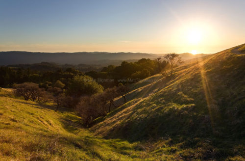 Fine art stock photograph from Russian Ridge, California. These lovely hills are caught mid-transition, between the dry grass of summer and the green of spring.