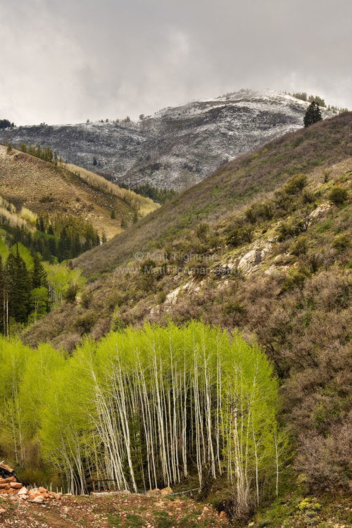 Fine art stock landscape photograph featuring beautiful green aspen trees and fresh summer snow in the Rocky Mountains, near Park City, Utah.