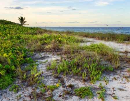 Fine art stock photograph of natural South Florida coastline in Mizell-Johnson State Park, near Fort Lauderdale. The beautiful landscape oozes serenity at sunset.