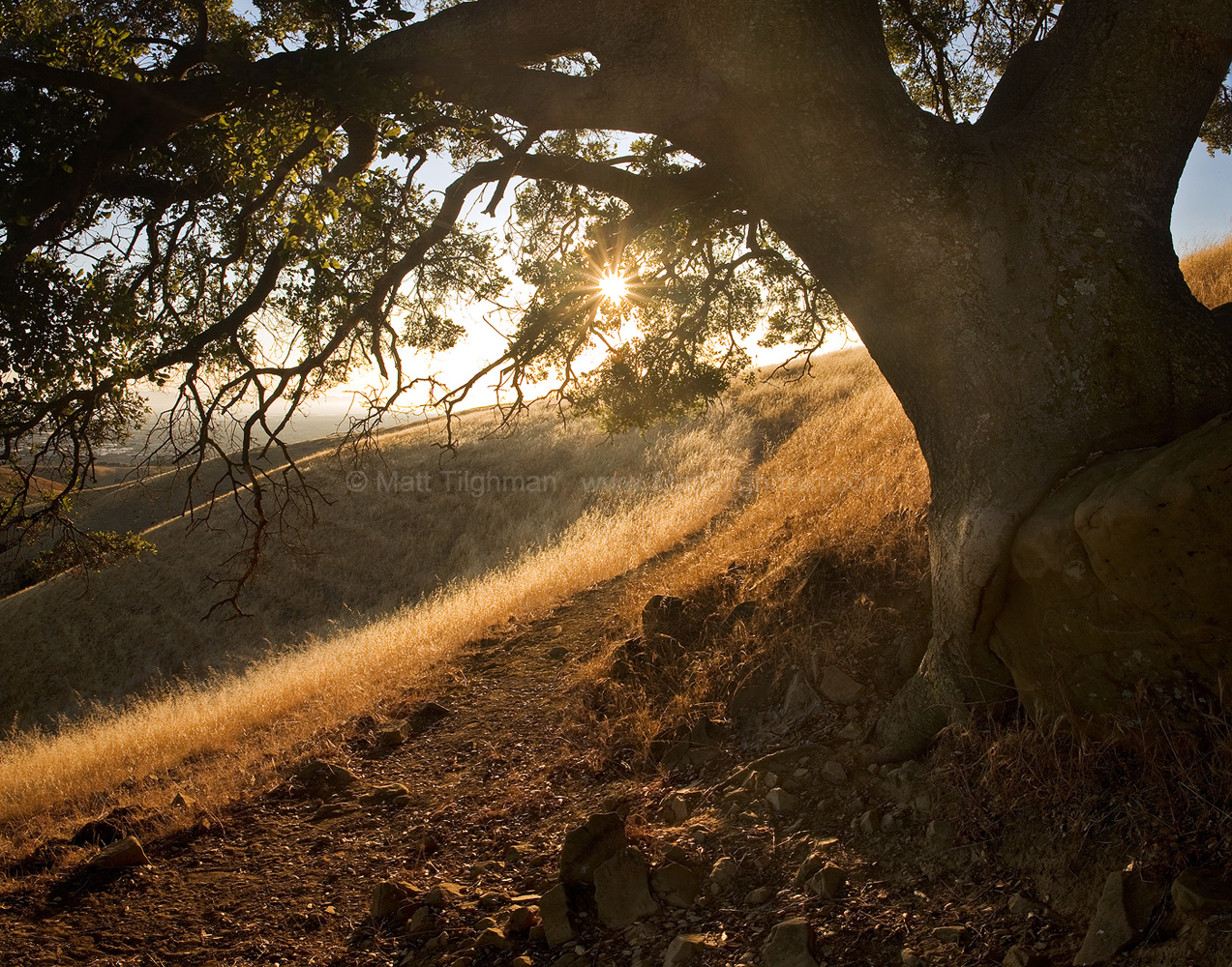 Fine art stock photograph from California's East Bay Area. From the shade of an ancient oak tree, the sunset lights the chaparral landscape and city beyond.