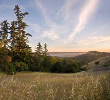 Fine art stock photograph of Alder Springs Trail, Russian Ridge Open Space, in the Santa Cruz Mountains of California, in the warm colors of early summer.
