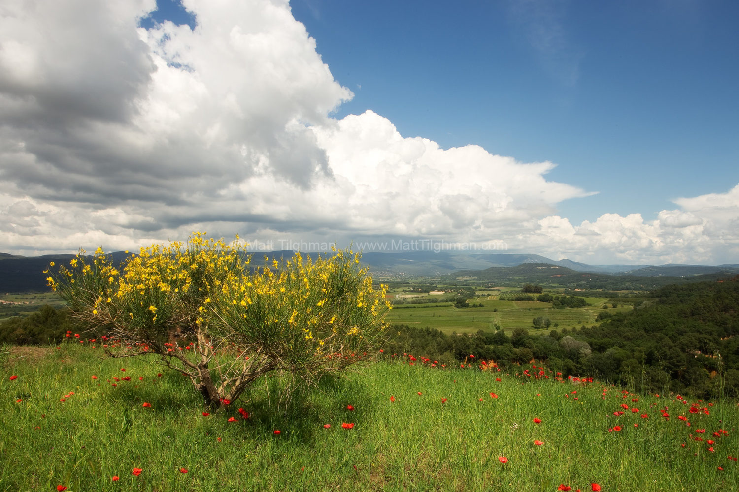 Fine art stock photograph of Provence in spring, with gentle rolling hillsides and vibrant wildflowers. Taken from atop the town of Roussillon, France.