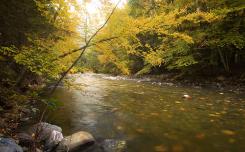 Autumn is still early, but some trees are changing color along the Cold River in Massachusetts's Berkshire Mountains